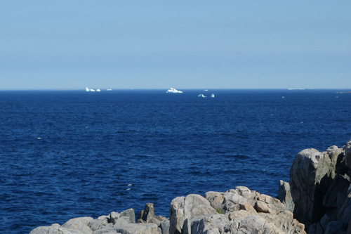 Icebergs seen from Oliver's Cove